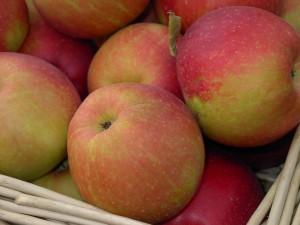 saftige Äpfel auf dem Apfelfest in Bad Waldliesborn