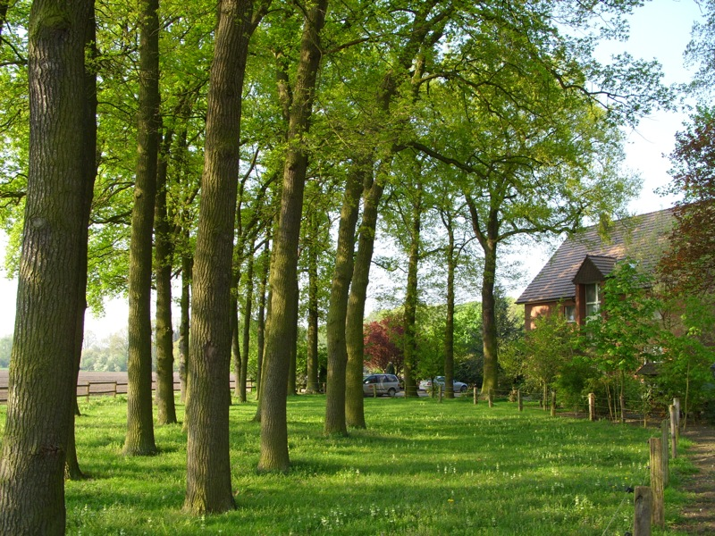 Hotel Pension & Appartement Haus Stallmeister in Lippstadt Eichenbäume