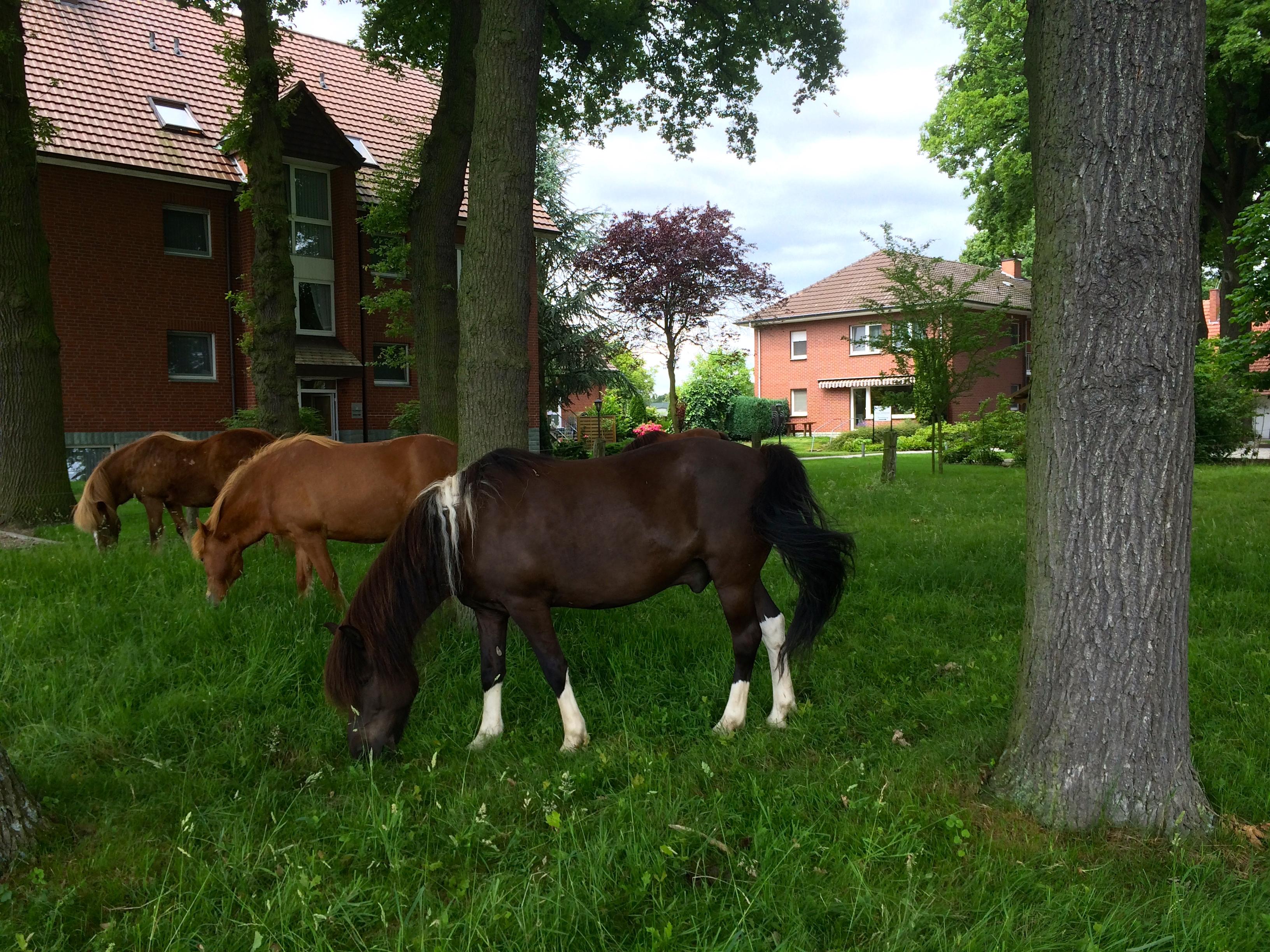 Hotel Pension Lippstadt Bad Waldliesborn Haus Stallmeister Pferdewiese mit Pferden im Sommer