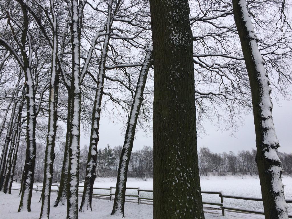 Haus Stallmeister im Schnee Eichen, Feld, Wiese
