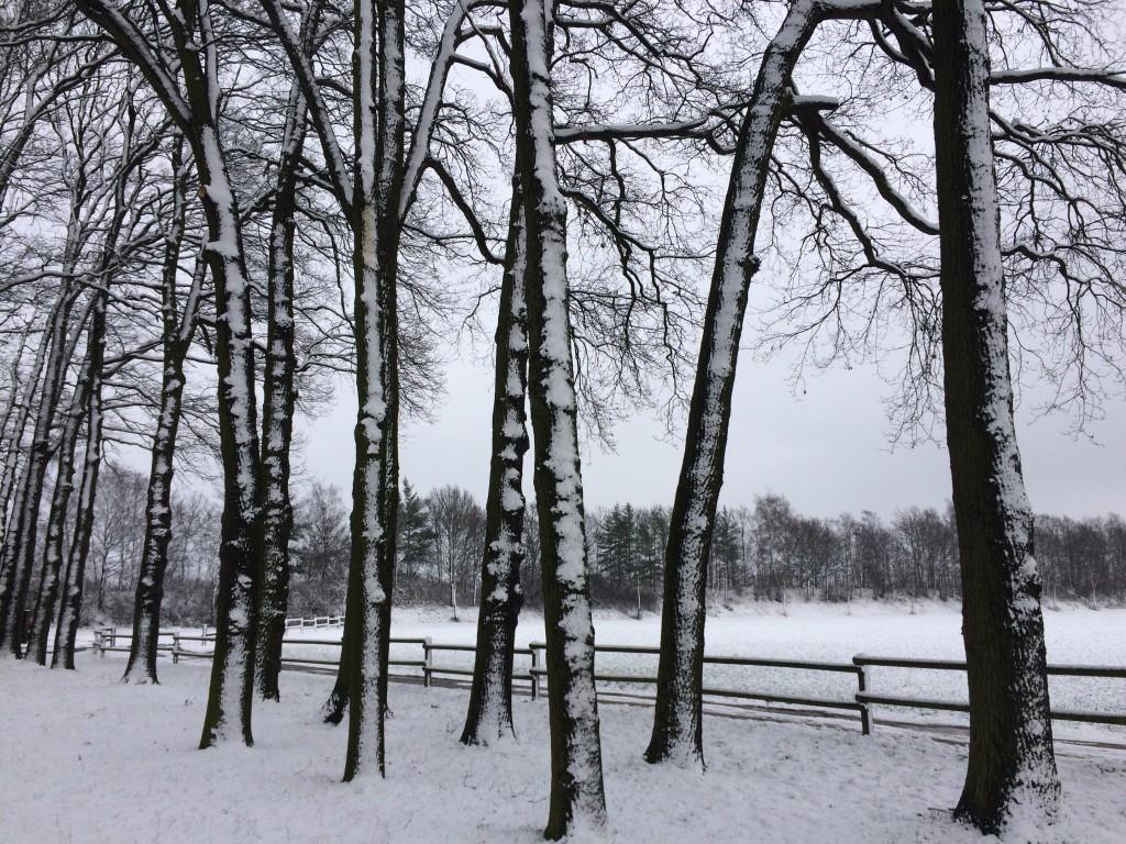Haus Stallmeister im Schnee Eichenbäume mit Schnee Pensionsaussicht