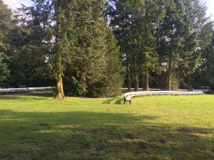 Kurpark Park Bad Waldliesborn Bäume Grün Natur 2