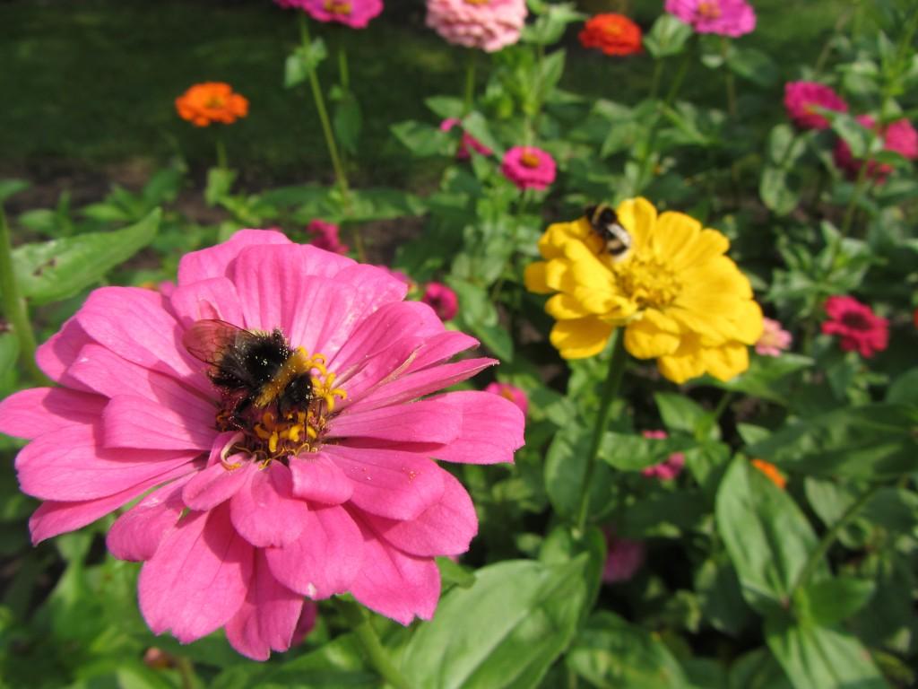 Delbrück Blumenwiese mit Biene