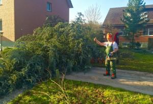 Vorsicht Baum fällt! mehr Sonnenlicht in den Hotelzimmern Haus Stallmeister Bad Waldliesborn