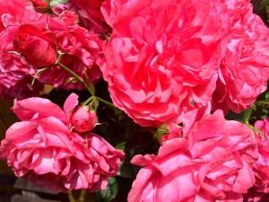 die Blumen fangen an zu blühen - Frühlingsmarkt Bad Waldliesborn nur wenige Minuten vom Hotel entfernt