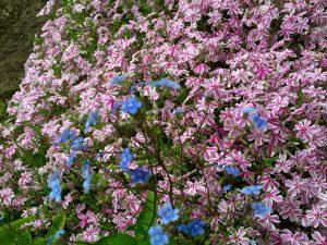 Blumen in Bad Waldliesborn- der Waliboexpress fährt Pensionsgäste von A nach B entlang schöner Natur