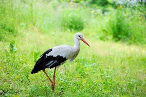 (Pavlo Burdyak/Shutterstock.com) Vogelpark Heiligenkirchen in der Nähe vom Hotel