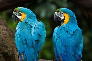 (Lukas Budinsky/Shutterstock.com) Wir wünschen allen Hotel Gästen viel Spaß im Tierpark Heiligenkirchen