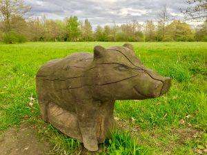 Wildschwein - Laufweg im Park in Lippstadt