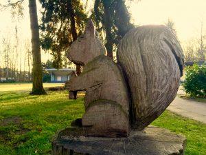 Eichhörchen am Laufweg Grüner Winkel Lippstadt