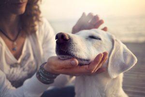Urlaub mit Hund in Bad Waldliesborn
