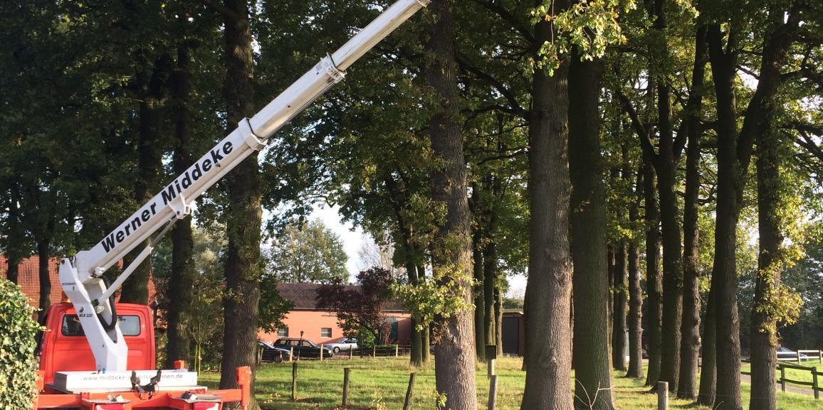 Baumschnitt auf dem Grundstück der Hotel Pension