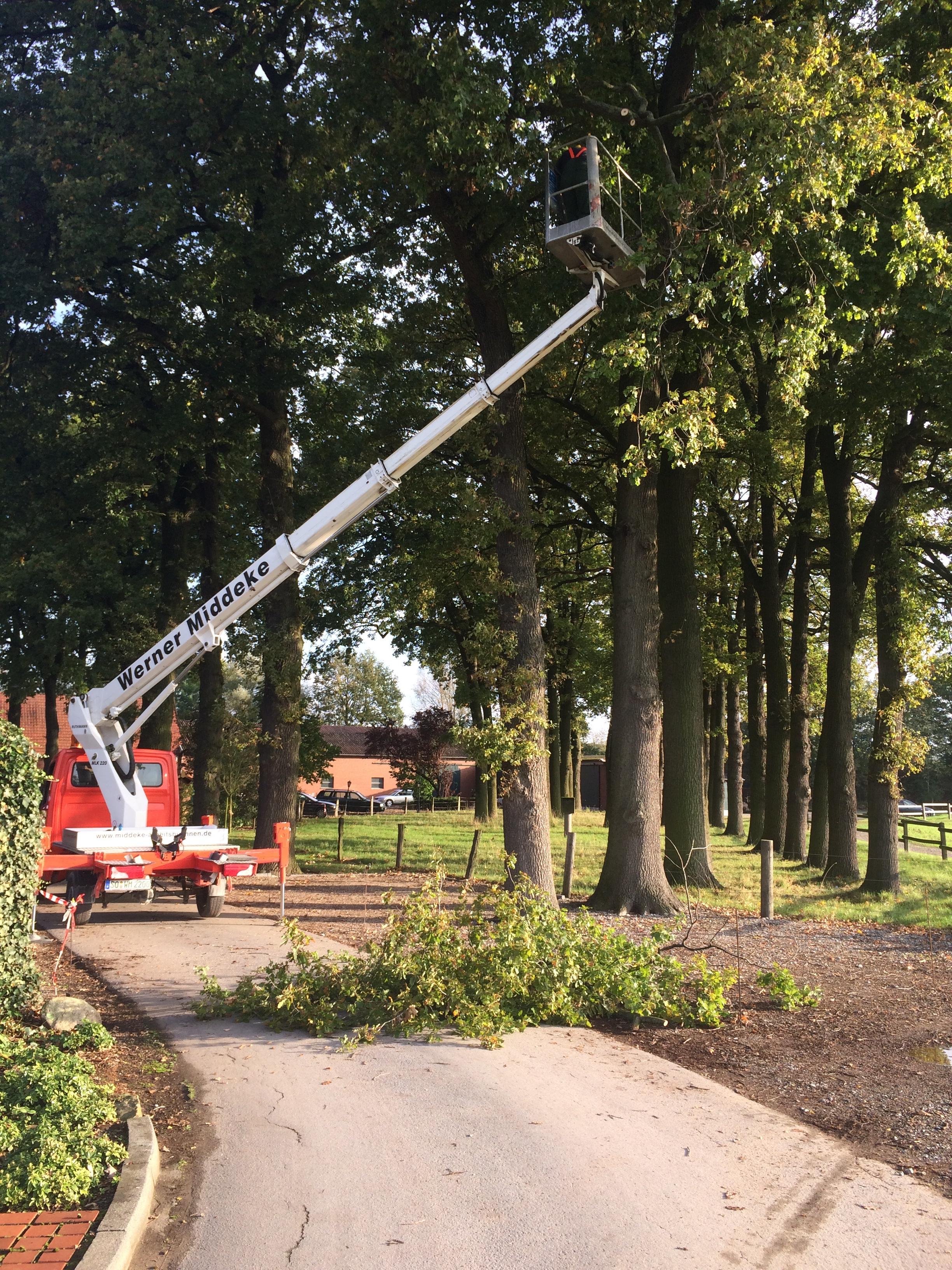 Hotel Pension Lippstadt Bad Waldliesborn Haus Stallmeister Baumschnitt an Eichenbäumen