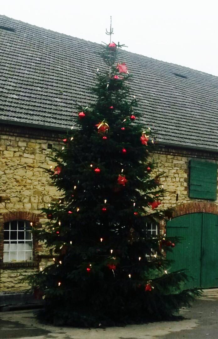 Weihnachtsbaum ohne Schnee bei Lippstadt